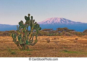 berg, kilimanjaro, sonnenaufgang