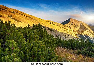 berg, landschaftsbild