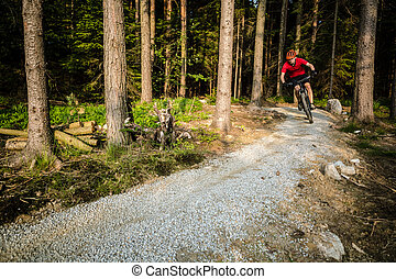 berg radfahrer, reiten, radfahren, in, sommer, wald