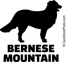 berg, rasse, silhouette, name, bernese