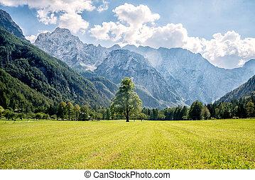 berg, Tal, grün, Bäume