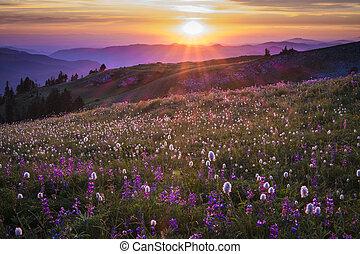 berg, wildflowers, ondergaande zon , backlit