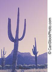 berg, woestijn, achtergrond, saguaro