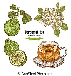 Bergamot fruits, flowers, leaves and cup of tea isolated on white background. Hand drawn set. Vector illustration