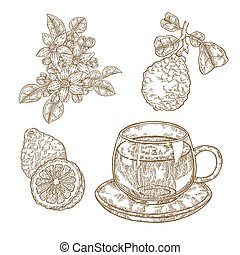 Bergamot fruits, flowers, leaves and cup of tea isolated on white background. Hand drawn set. Vector illustration engraved