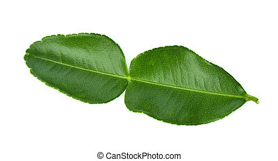 Bergamot leaf isolated on white background