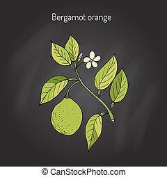 Bergamot orange branch