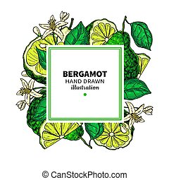 Bergamot vector drawing frame. Isolated template of citrus ...