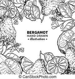 Bergamot vector drawing frame. Isolated vintage template of ...