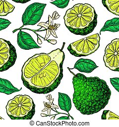 Bergamot vector seamless pattern drawing. Isolated vintage ...