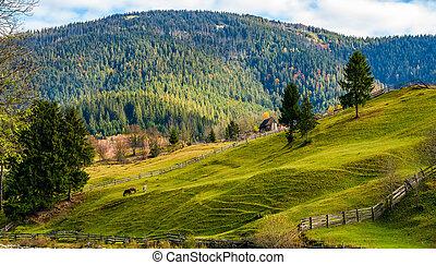 berge, grasbedeckt, bäume, herbst, fichte, hügel