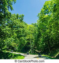 berge, groß, landschaftlich, rauchig, feuerdrachen, schwanz,...