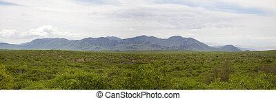 berge, kunene, nördlich , gebiet, innerhalb, namibia, zebra