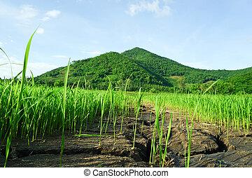 bergen, helder, gras, groen veld