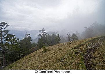 bergen, mist.