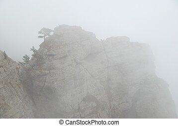 bergen, mist
