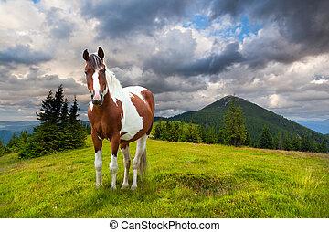 bergen, paarde, zomer