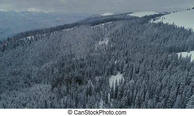 bergen, vlucht, winter, sneeuw, dennenboom, neuriën, bos