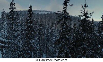 bergen, vlucht, winter, sneeuw, dennenboom, neuriën, bos, zonopkomst