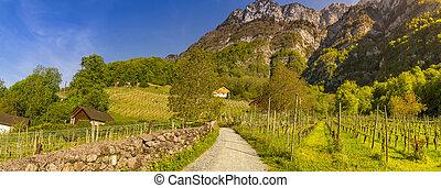 bergen, wijngaarden, door, straat, land