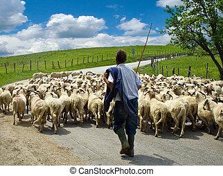 berger, à, sien, mouton, troupeau
