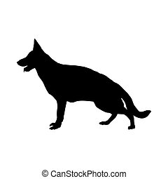 berger allemand, silhouette, chien