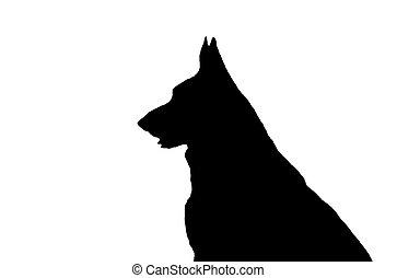 berger allemand, silhouette, ouverture bouche