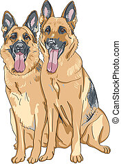 berger, croquis, couleur, race, deux, chien, allemand, ...