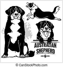 berger, ensemble, -, chien, illustration, isolé, vecteur, fond, australien, blanc
