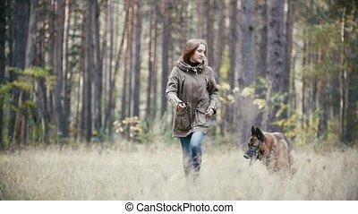 berger, fonctionnement femme, jeune, chien, forêt automne, ralenti
