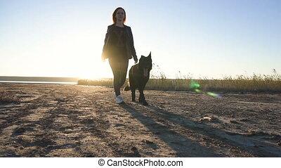 berger, marche, lent, caresser, elle, allemand, il, jeune, chien, mouvement, (sunrise), femelle noire, roux, coucher soleil, (scratching), plage, côté