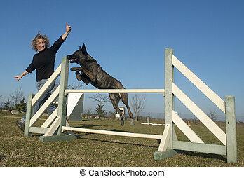 berger, sauter, chien, hollandais