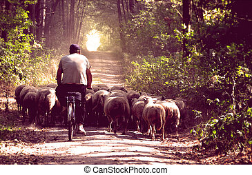 berger, style, sien, vendange, vélo, sheeps.