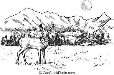 berglandschaft, wald, kiefer, panorama