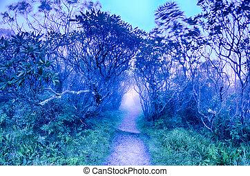 bergrücken, sceni, gärten, blaues, allee, felsig, nord-carolina, herbst, nc