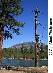 bergsee, bäume