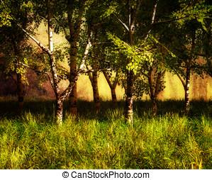 berk, zomer, bomen, landscape
