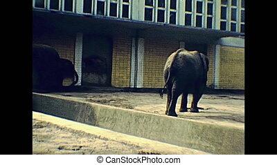 Berlin zoo elephants in 1970s - Elephants in Berlin zoo in...