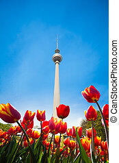 Berliner Fernsehturm view with red tulips
