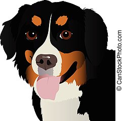 Bernese mountain dog close up vector illustration