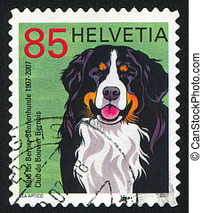 Bernese Mountain Dog - SWITZERLAND - CIRCA 2007: stamp...