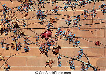 Berries and Fall leaves on brick
