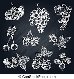 Berries Hand Drawn Collection