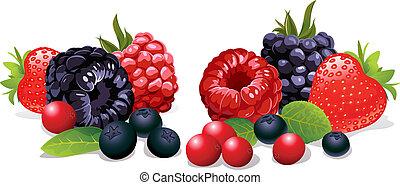 berries, isoleret
