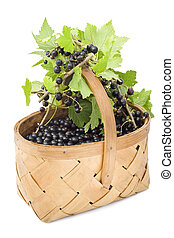 Berries of a black currant in a basket.