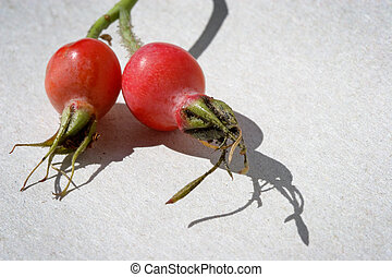 Berries of a dogrose