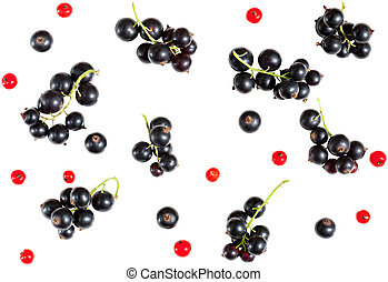 berries of black currant and red currant isolated on white background.