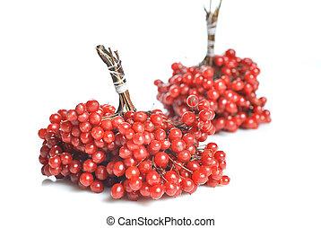 Berries of red Viburnum