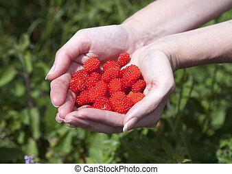 berries of ripe raspberry