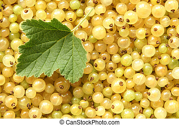 Berries of white currant with green leaf, for backgrounds or textures